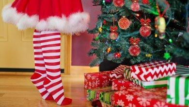 Photo of Naravna božična jelka: Za praznike povabite v goste tudi naravo