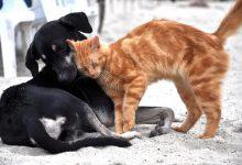 Photo of Izjemni odzivi ljudi v pomoč zapuščenim živalim