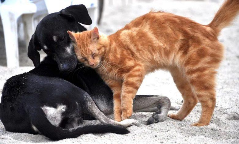 pomoč zapuščenim živalim, Qlandia, Darilnih kartic Qlandia, živali, Odgovorno do živali