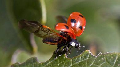 Photo of Izumrtje grozi pol milijona vrstam žuželk, odgovorni smo ljudje