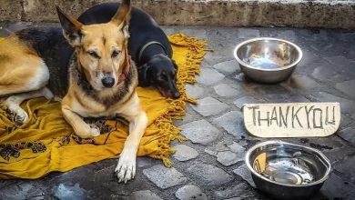 Photo of Kot prostovoljec pomagaj brezdomnim psom in drugim živalim v Moldaviji