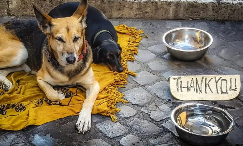 prostovoljec, Moldavija, živali, pes, ALGA, Association for the Protection of Homeless Animals, potepuški pes, pes, psi,