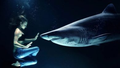 Photo of 6 morskih psov, s katerimi lahko plavaš