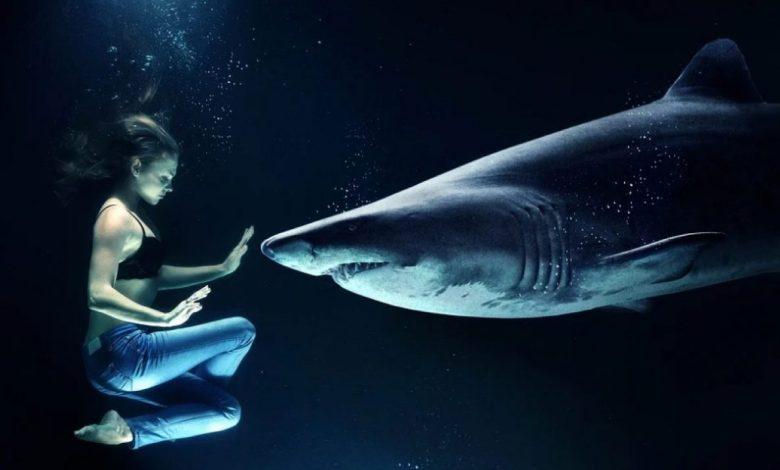 morskih psov, morski pes, Najbolj zahtevni, Potapljanje s prijaznimi velikani,