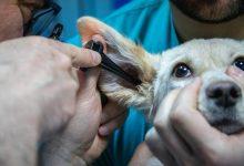 Photo of Od danes znova več možnosti za zdravstveno varstvo živali