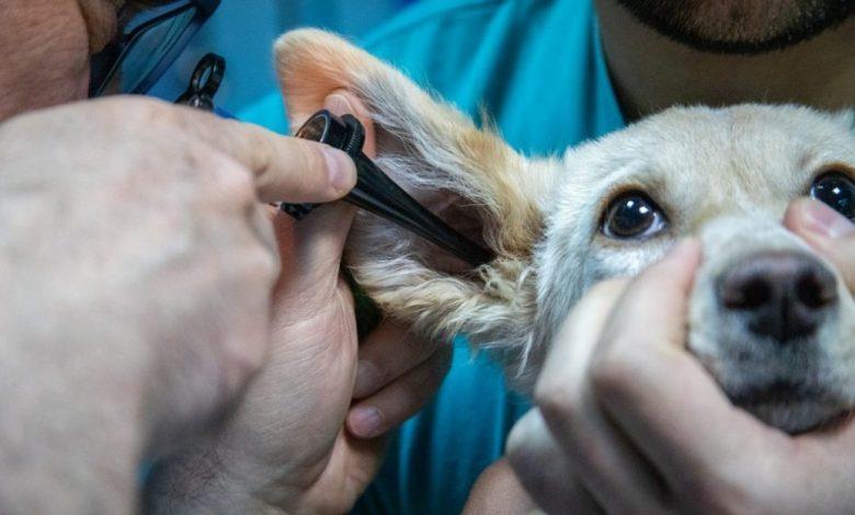 zdravstveno varstvo živali, ukrepih, ukrepi, Slovenmija, covid-19, koronavirus, živali, veterinarska ambulanta, sistematično,