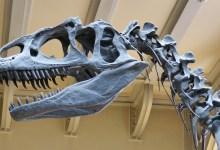 Photo of Dinozavri: Današnji miši podobni majhni sesalci so jedli meso dinozavrov
