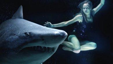 Photo of Avstralec pretepel morskega psa