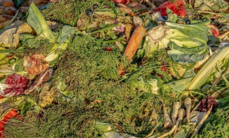 Hrana, zavod pip, nahranili, odpadna hrana, odpadki,