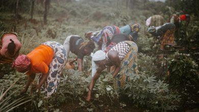 Photo of 8 tisoč kilometrov dolg Veliki Zeleni Zid bo preprečil širjenje puščave v Afriki