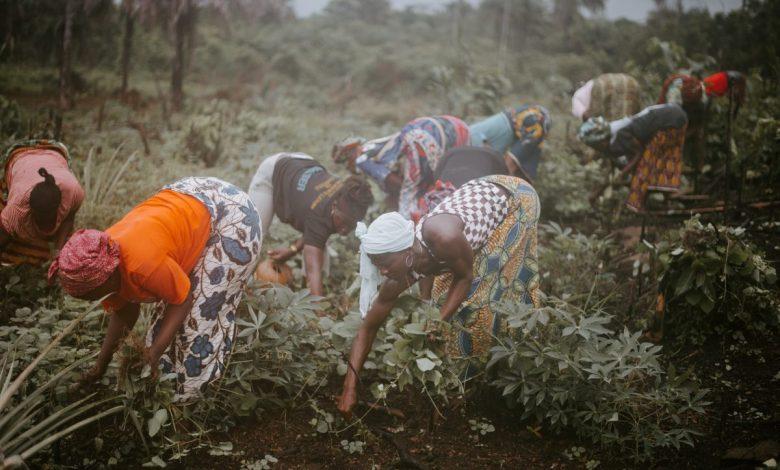 Veliki Zeleni Zid, Afrika, v Afriki, 2030, Velikega Zelenega Zidu