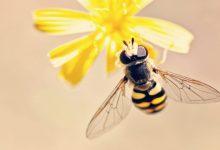 Photo of Natečaj: Ministrstvo za kmetijstvo išče kreativno zasnovo za nagrado zlata čebela