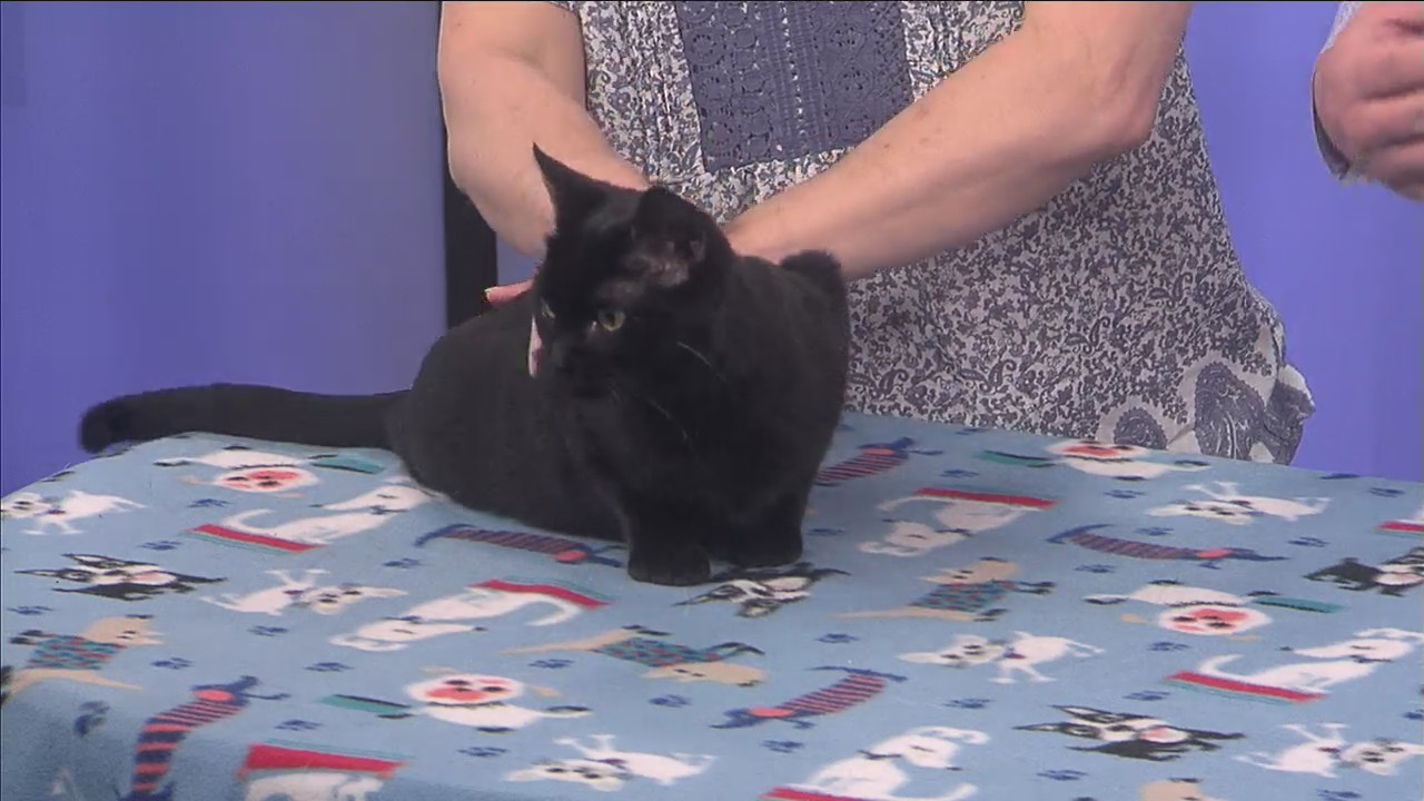 Adopt-a-Pet: Meet Claudette!