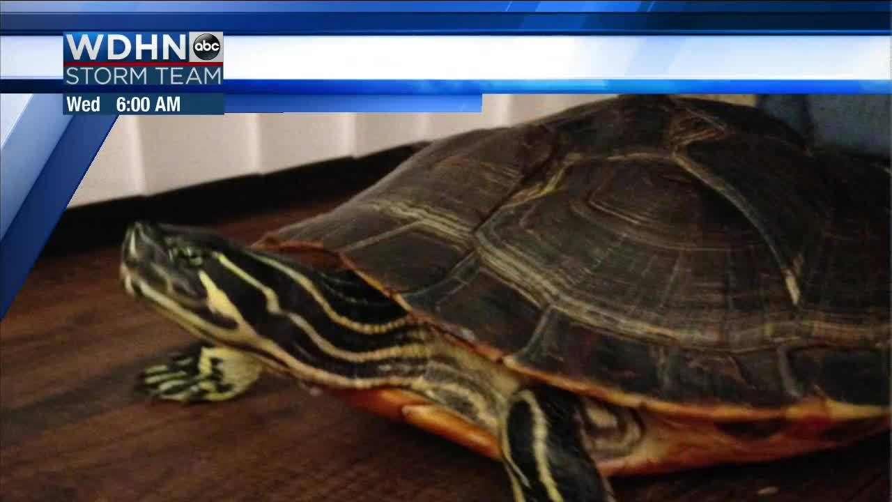 Wake_Up_Wiregrass__Turtle_Tuesday_and_ca_6_20190423121606