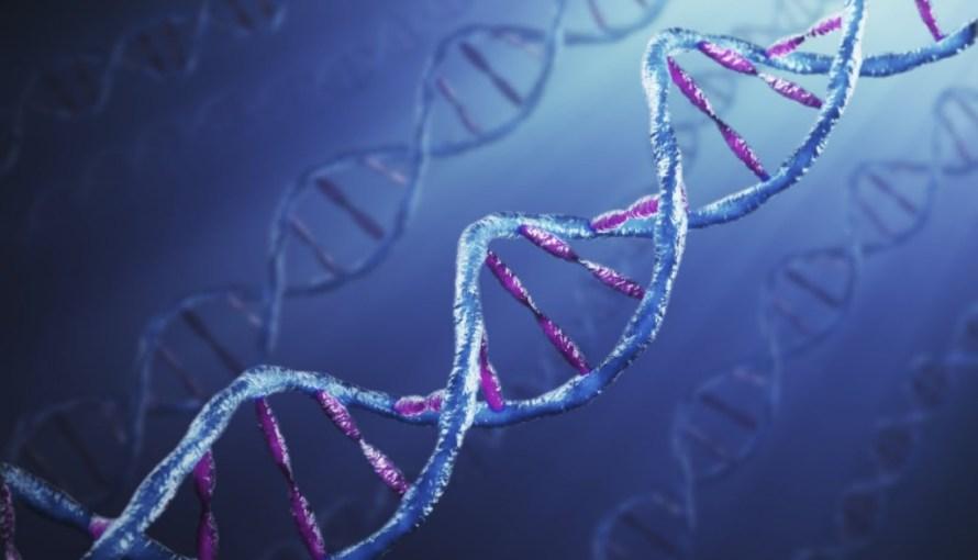 genetica dna