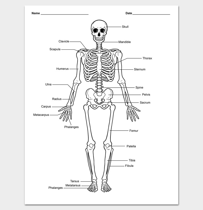 body outline template 27 printable pdf formats dotxes