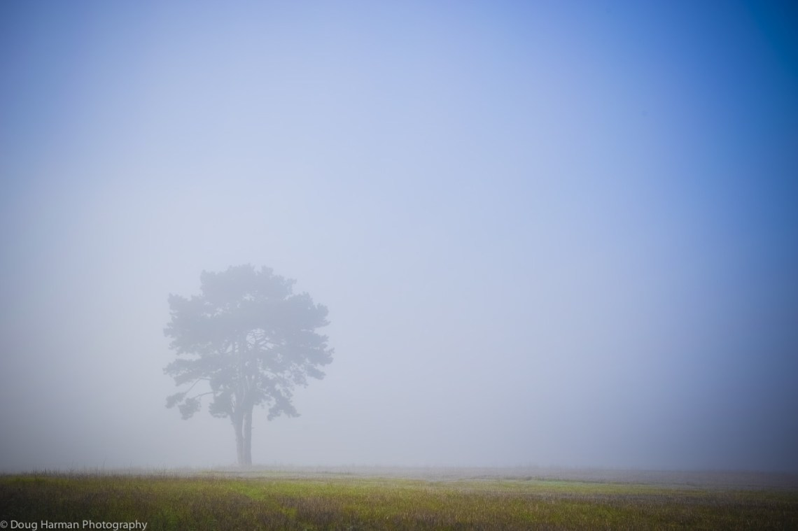 Misty morning in autumn are ideal for some stunning, low contrast photos, so don't dilly dally in bed, get out there.