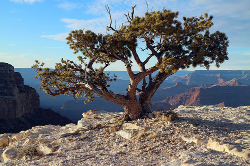 Photo Credit:  Grand Canyon National Park