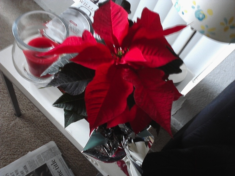 Lights Indoor String Christmas Poinsettia