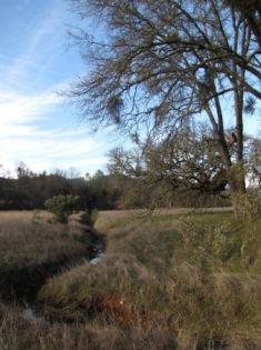 Kanaka Valley riparian area