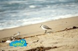 foto_california_05