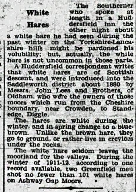 WHITE-HARES-1911
