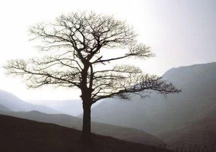 WEB-lone-tree-redone