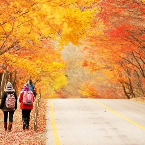automne en coree