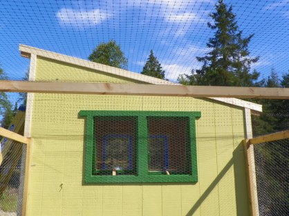 Deer netting installed overhead - to be replaced with chicken wire down the road