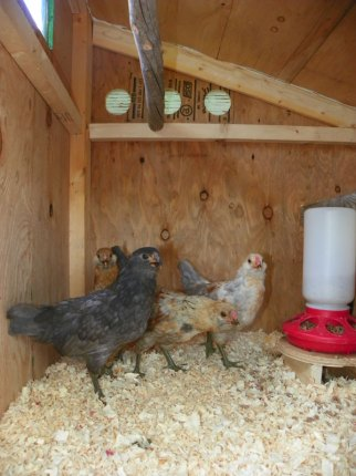 Full on view of the coop inside