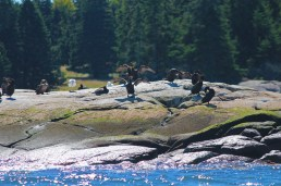 cormorants drying on the rocks