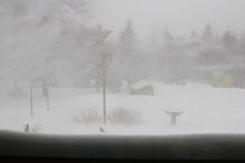 Blizzard Nemo from the kitchen window