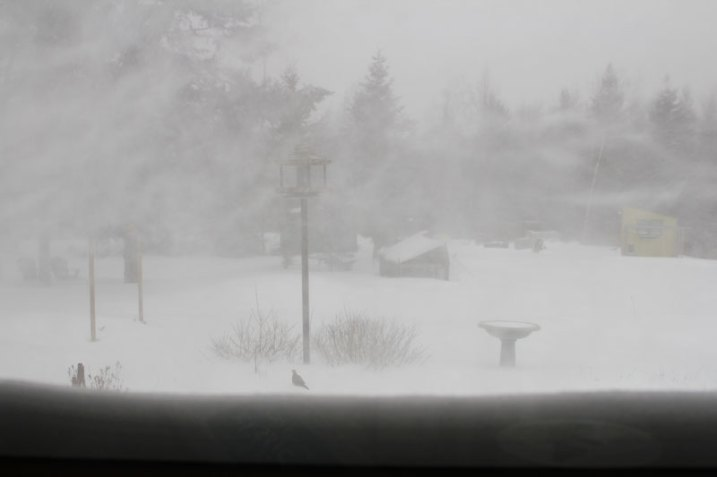 Blizzard Nemo from the kitchen window
