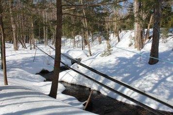 stream in the sugar bush