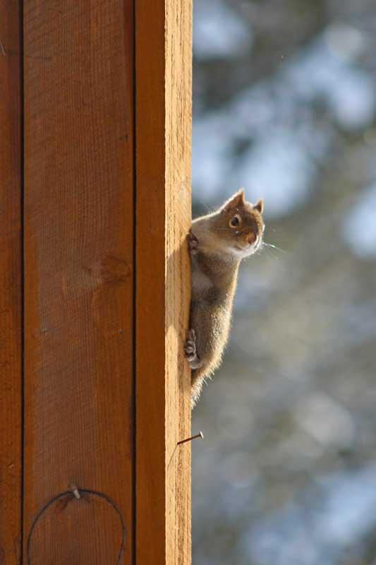 squirrel after feeder