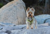 Gidget trying to figure out how to get to me on the rocks
