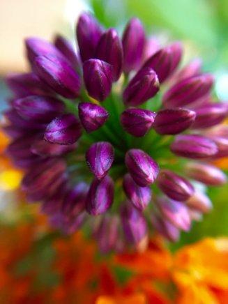 macro view flower