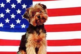 Schmitty USA Flag