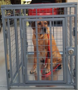 GIANT Heavy Duty Dog Crate Escape Proof & Indestructible from CarryMyDog.com
