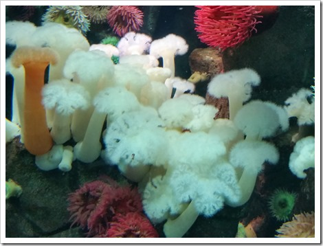 Ripley's Aquarium Canada Wordless Wednesday from @DownshiftingPRO  Coral and Sea anemone