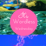 Ripley's Aquarium in Canada Toronto Wordless Wednesday