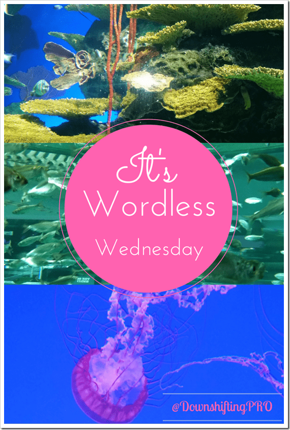 Ripley's Aquarium Canada Wordless Wednesday from @DownshiftingPRO BLOG