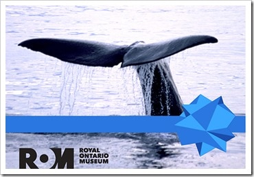 Royal Ontario Museum_blue-whale-giving-tuesday_@DownshiftingPRO