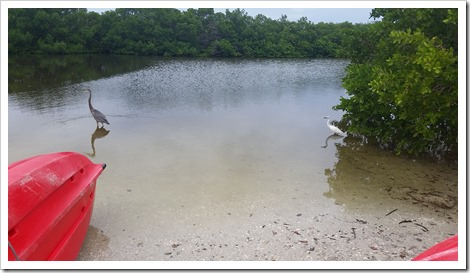 Lagoon at Fort Da Soto Florida State Park @DownshiftingPRO Kayak in Florida