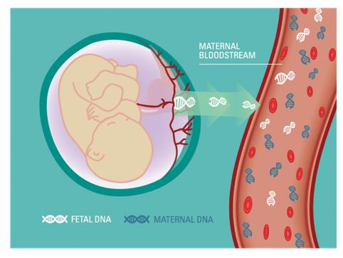 Ariosa Fetal DNA