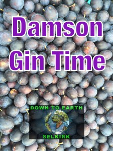 Best Damson Gin Recipe