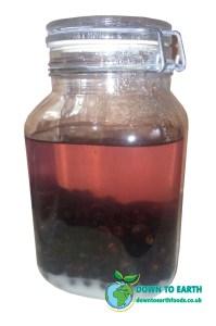Sloe Gin In Kilner Jar