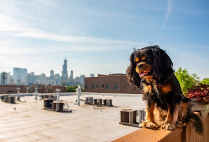 How To Pet Proof Your Chicago Apartment
