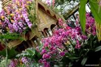 Kew Orchids Festival Doyouspeaklondon blog