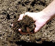 Soil biology basics